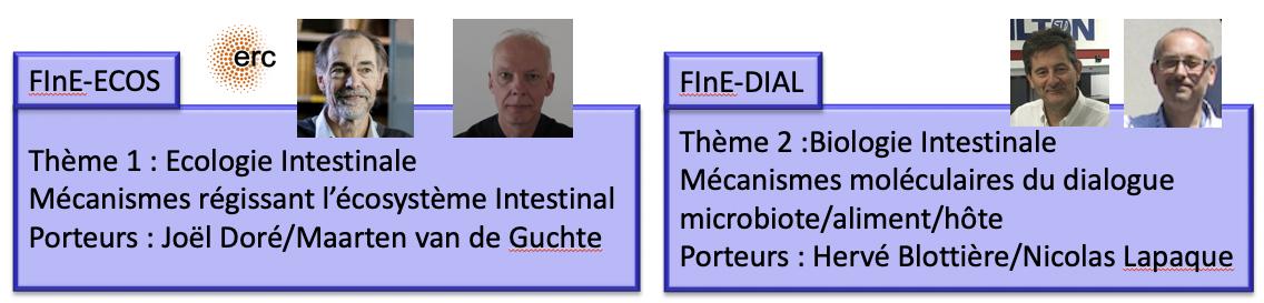 FInE themes