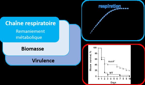 Philou - Biomasse