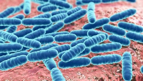 Le microbiote, un organe à part entière