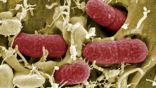 RFI A quoi sert le microbiote?